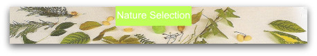 Nature selection for bugs, bug craft, bugs crafts, make bugs, easy crafts, easy crafts for kids, nature crafts, crafts from nature