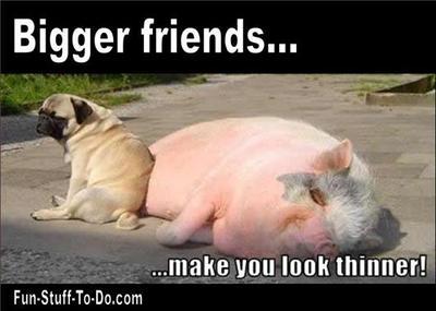 תוצאת תמונה עבור dog jokes