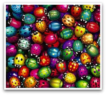 Multi coloured ladybugs, ladybug colors, ladybug, ladybugs, cute ladybugs, color, colours