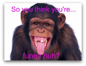 funny chimp