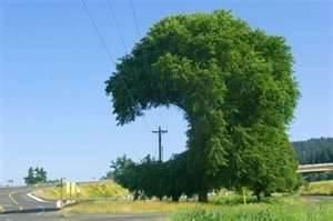 Not so pointless circle shape