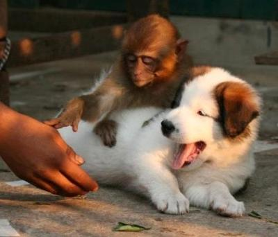 Hands Off My Dog Human
